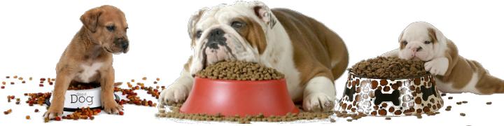 Mi cachorro no quiere comer